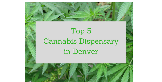 Top 5 Cannabis Dispensary in Denver
